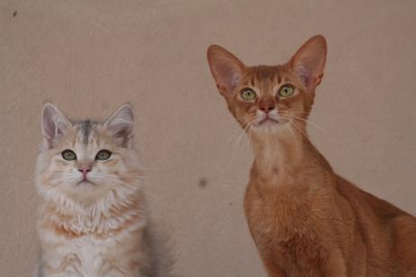 Archie e Yggi